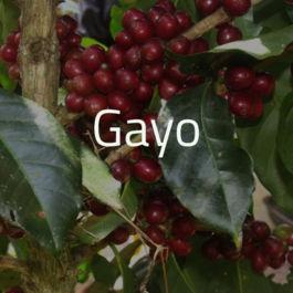 Green Bean Kopi Arabica Aceh Gayo Atu Lintang - 1 Kg