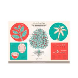 SCAA - Anatomy of Coffee Plant