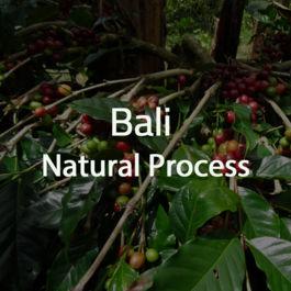 Green Bean Kopi Arabica Bali Natural Process - 1 Kg