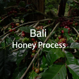 Green Bean Kopi Arabica Bali Honey Process - 1 Kg