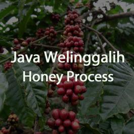 Green Bean Kopi Arabica Java Welinggalih Honey Process - 1 Kg